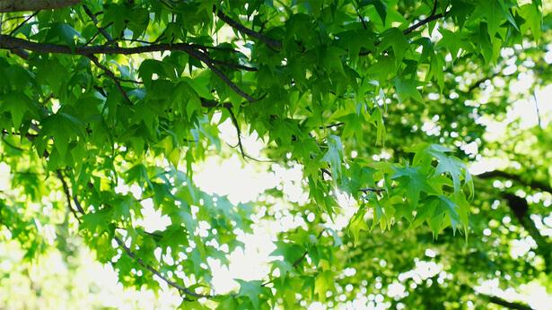 la luce e le foglie